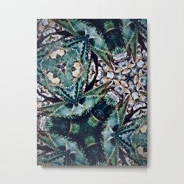 Succulents On Show No 3 Metal Print
