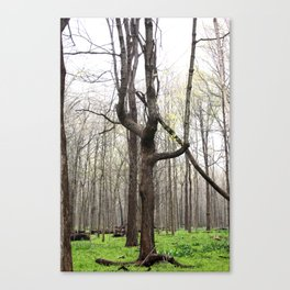W tree Canvas Print