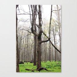 W tree Canvas Print