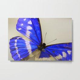 Papillons1 Metal Print