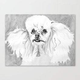 Black and White Toy Poodle Canvas Print