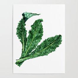 Lacinato Kale Poster