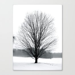 A Cold Winters Fog Canvas Print