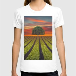 Lonely Tree In Field At Sunset Ultra HD T-shirt