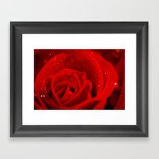 A rose is a rose is a rose Framed Art Print
