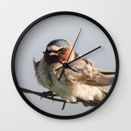Cliff swallow Wall Clock