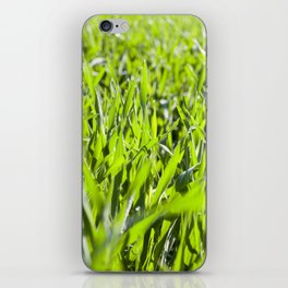 Field with cereal iPhone Skin