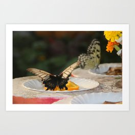 Butterfly Feeding Art Print