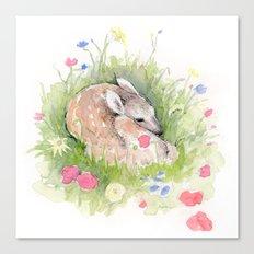 Little Fawn Canvas Print