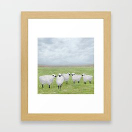 sheep and queen anne's lace Framed Art Print