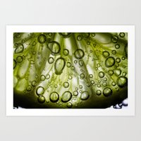 lime Art Prints featuring Lime by Ryan Zimmermann