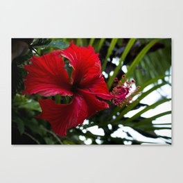 red. Canvas Print
