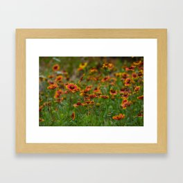 Indian Blanket Framed Art Print
