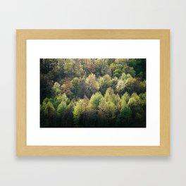 Spring Greens Framed Art Print
