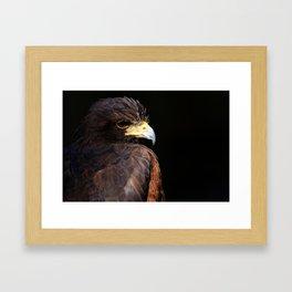 Harris Hawk | Wildife Photography | Bird of Prey | Bird | Raptor | Portrait | Hawk Framed Art Print