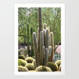 Cactus Garden at Sunnyland Estates in Rancho Mirage Art Print