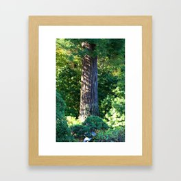 Shadows in the Trees Framed Art Print