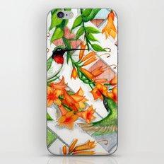 Hummingbirds and Trumpet Vines iPhone & iPod Skin