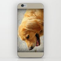 golden retriever iPhone & iPod Skins featuring Happy Golden Retriever  by MyLove4Art