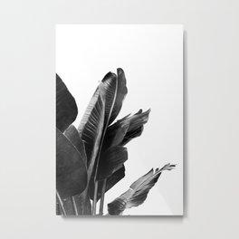 Bird of Paradise Plant Black and White 02 Metal Print