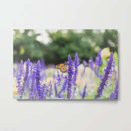 Monarch Butterfly and the Purple Flowers Metal Print