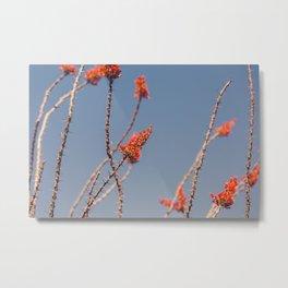 Ocotillo in Bloom Metal Print