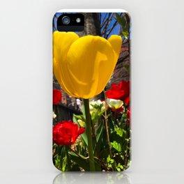 Yellow Tulip Original Photograph iPhone Case