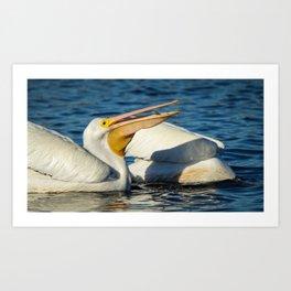 American White Pelican Catching a Minnow Fish Art Print