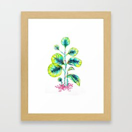 Peperomia Framed Art Print