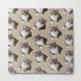 beige tan grey american wirehair cat pattern Metal Print