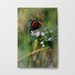 Salute The Red Admiral  Metal Print
