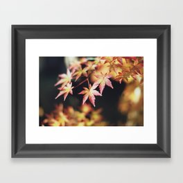 autumn reds Framed Art Print