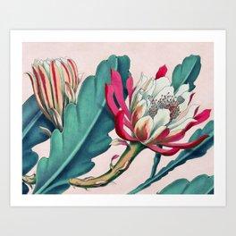 Flowering cactus IV Art Print