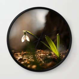 Light In Shade. Snowdrop Flower Bathing In Sun #decor #society6 Wall Clock