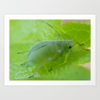 bug Art Prints featuring bug by Dottie