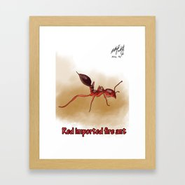 Red imported fire ant Framed Art Print