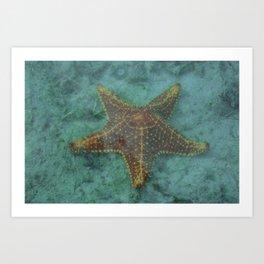 Starfish in the Lagoon Art Print