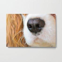 Face of a dog Metal Print