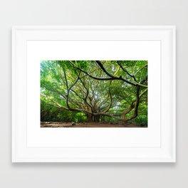 The Great Banyan Tree, Haleakala, Maui, Hawaii Framed Art Print