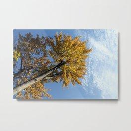 Yellow maple Metal Print