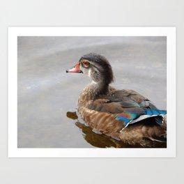 Young wood duck Art Print