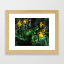 Yellow Lady's Slippers at Itasca State Park Framed Art Print