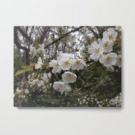 Fruit in bloom Metal Print