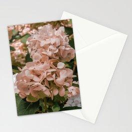 Pink Hydrangea Stationery Cards