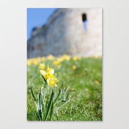Cliffords Tower Daffodils Canvas Print