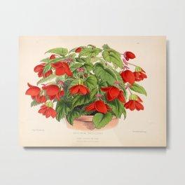 Red Begonias Metal Print