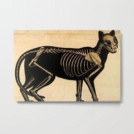 Squelette de chat Metal Print