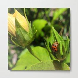 Lil' Ladybug Metal Print