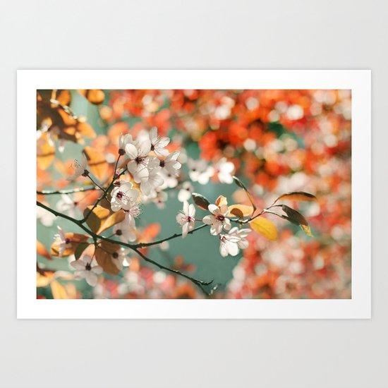 Plum Cherry Blossom Art Print