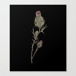 Bull Thistle Canvas Print